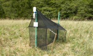 DSCN1874 2 300x180 Insektenmonitoring im Naturschutzgebiet Stechlin erneut gestartet