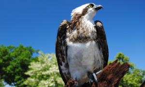 DSC 0009 500x300 300x180 Landschaftspflegeverband lädt zur Vogelstimmenexkursion ein