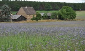 Feldbesichtigung 23 300x180 Regionalwerkstatt Blühende Landschaften