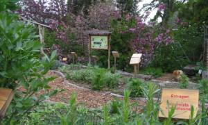Garten karin 300x180 Gartenzeit – Pflanzen erleben