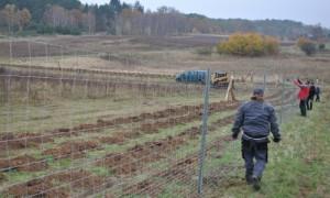 Heckenpfl 3 Fbg 0046 300x180 Heckenpflanzung in Fürstenberg/Havel