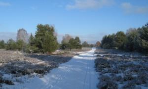 IMG 3866 500x300 300x180 Neujahrs Wanderung auf der Kyritz Ruppiner Heide