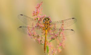 Insekten 10 300x180 Ausstellung Naturfotografien