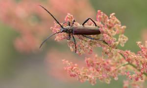 Insekten 11 300x180 Ausstellung Naturfotografien