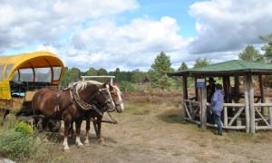 Kirsten Tackmann 02 300x180 Kirsten Tackmann besucht Kyritz Ruppiner Heide