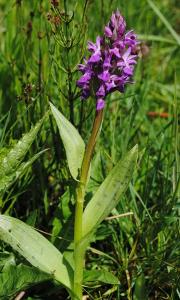 Orchideen2 Menzer Naturforscher zusammen mit Ranger Thomas Hahn auf Orchideensuche