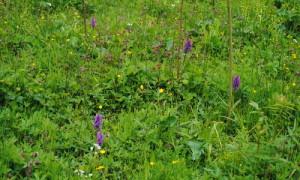 Orchideen 03 300x180 Zwei Naturparke und Tausende Orchideen