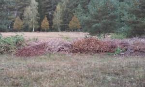 Trockenrasen1 300x180 Ein Trockenrasen ist kein Kompostplatz!