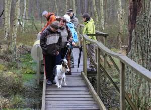 Der Kiefern-Birkenmoorwald am Großen Barschsee ist Station des Moorerlebnispfades.