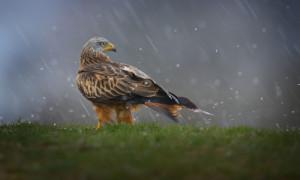 Vögel 17 300x180 Ausstellung Naturfotografien