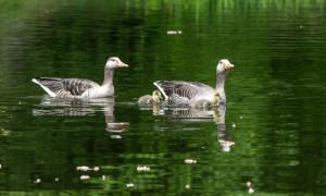 VAK2 Autor Daniel Marienfeld 300x180 Landschaftspflegeverband lädt zur Vogelstimmenexkursion ein