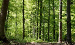 Waldbaden 300x180 Lange Nacht der Naturwacht