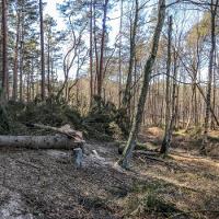 NSF EUlife Feuchtwälder (M. Zauft)