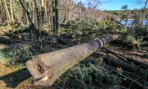 Wittwesee 7941 k 300x180 Für mehr Licht und Wasser   ökologischer Waldumbau am Wittwesee
