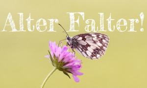 alter falter2 300x180 Rheinsberg ausgezeichnet im Bundeswettbewerb Naturstadt   Kommunen schaffen Vielfalt