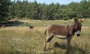 esel zecower berg 300x180 Vertragsnaturschutz im Naturpark