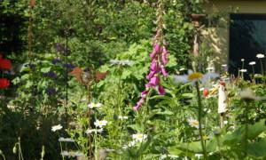 """gartenwettb k 300x180 Wie """"natürlich"""" ist Ihr Garten?"""