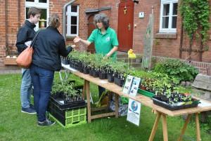 k DSC 00055 300x201 Kleine Tomatenpflanzenbörse war großer Erfolg!