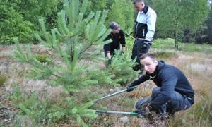 k DSC 00093 300x180 Azubi Projekttage im Naturpark: praktischer Einsatz für die biologische Vielfalt