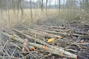 Das Erlenholz wurde in den Graben zur Verlangsamung des Abflusses eingebaut.