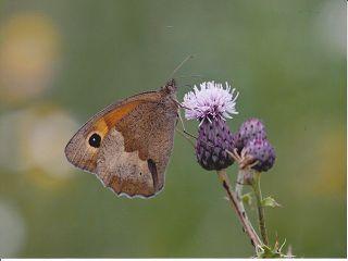 k Schmetterling Donner Eröffnung der Fotoausstellung Schmetterlingsparadies Grünhaus