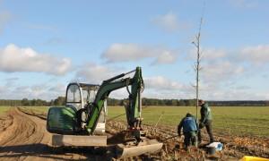 pflanzung 300x180 Zuwegung zur Kyritz Ruppiner Heide wird bepflanzt