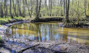 rhrhin 0415 5483 300x180 Stauhaltung für Rheinsberger Seen wird optimiert