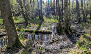 rhrhin 0415 5504 kl 300x180 Stauhaltung für Rheinsberger Seen wird optimiert