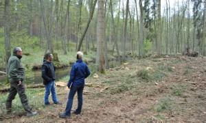 samenbäume entfernt 300x180 Bereisung im EU Life Projekt Feuchtwälder