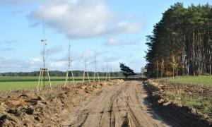 schatten 300x180 Zuwegung zur Kyritz Ruppiner Heide wird bepflanzt
