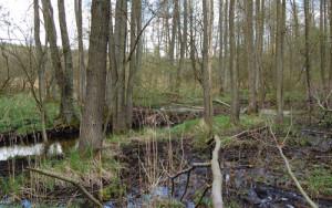Biberdamm am Radebach - Copyright: Naturpark Sternberger Seenland