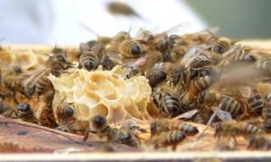 Bienen im Naturparkzentrum