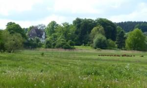 Gutshaus Alt Necheln, auf der Weide Salär-Rinder