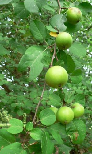 Karnin Mühlenmoor023 Apfelwein Rezept preisgegeben!