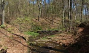 Klaasbachtal im Frühjahr