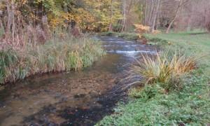 Laichgrube in der Warnow      Copyright: Naturpark Sternberger Seenland