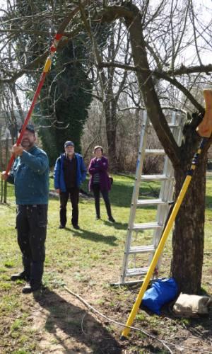Obstschnittseminar 2018 1 Obstbaumschnitt
