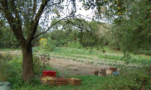 PfarrgartenQualitz2 Vortrag zu Apfelweinen aus dem Sternberger Seenland