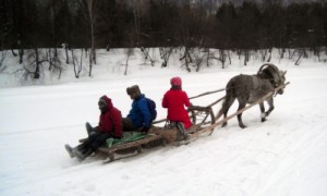 Pferdeschlitten in Russland