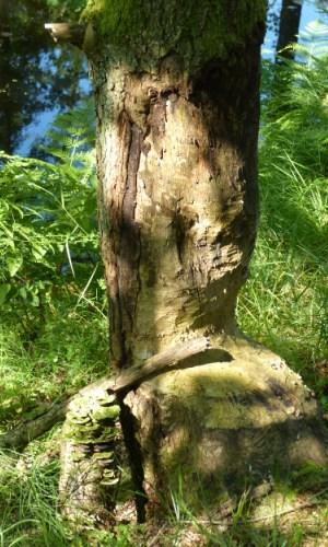 RadebachBiberfrass Wanderung Naturnahe Waldwirtschaft und Landschaftsarchitekt Biber