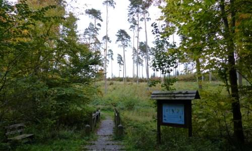 RadebachWanderweg Wanderung Naturnahe Waldwirtschaft und Landschaftsarchitekt Biber