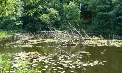 Schwarzer SeeSülten 1 Wanderung Wälder, Moore und der geheimnisvolle Schwarze See