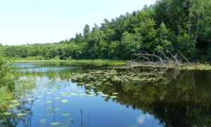 Schwarzer See bei Sülten
