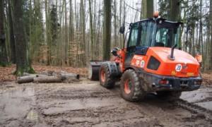 Renaturierung Strietholz