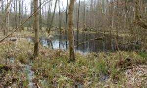 Strietholz
