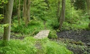 Im Wald bei Groß Raden