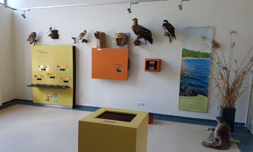erster Versuch Ausstellung im Naturparkzentrum in der Überarbeitung