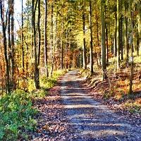 Eichenblattweg