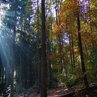 Wald am Herzberg