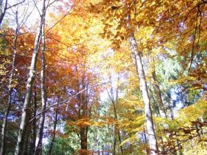 Taunus im Herbst